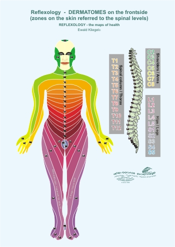 Reflexology - the Dermatomes on the frontside (zones on the skin referred to the spinal levels)