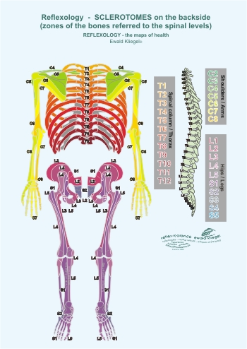 Reflexology - the Sclerotomes on the backside (zones on the bones referred to the spinal levels)